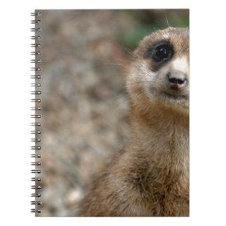 Cadernos Meerkat Grande-Eyed bonito