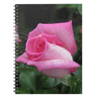 Cadernos O rosa do rosa floresce com gotas de água no