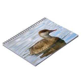 Cadernos Pato fêmea do larro, rufina do netta
