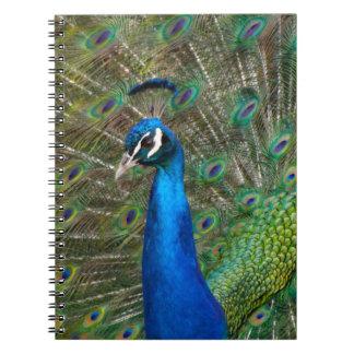 Cadernos Pavão