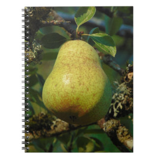 Cadernos Pera