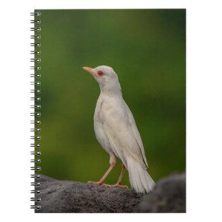 Cadernos Pisco de peito vermelho do albino no ponto da