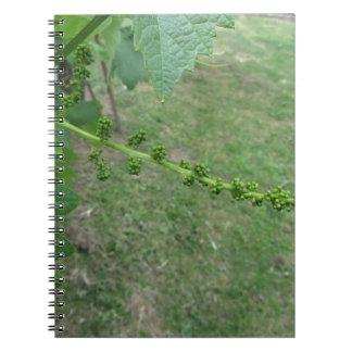 Cadernos Primeiros botões na árvore de mulberry branco