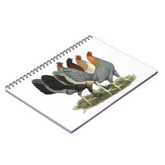 Cadernos Quatro galinhas de Gamefowl