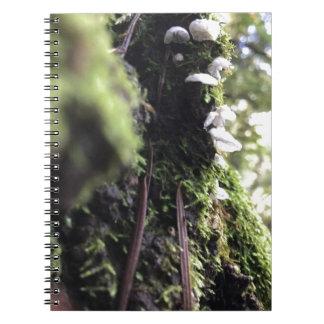 Cadernos Saias feericamente
