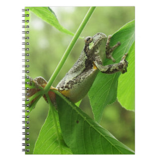 Cadernos Sapo de árvore que pendura sobre