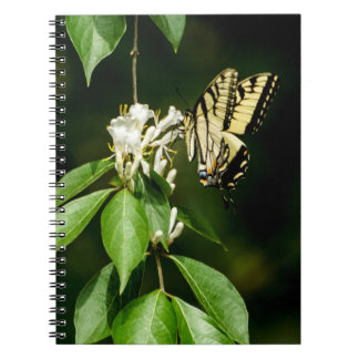 Cadernos Tigre Swallowtail no bloco de notas da madressilva