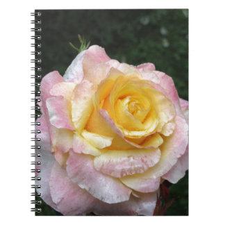 Cadernos Única flor do rosa amarelo com gotas de água