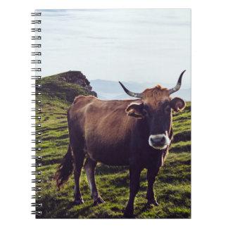 Cadernos Vaca bovina na paisagem bonita
