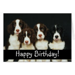 Cães de filhote de cachorro adoráveis cartao