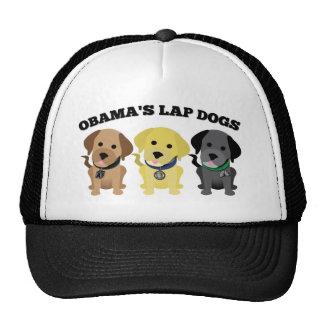 Cães de regaço de Obama - os meios do grosso da po Bonés