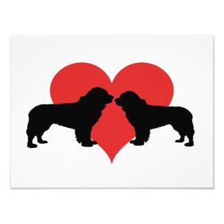 cães de Terra Nova Impressão De Foto