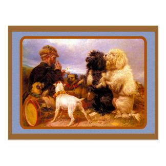 Cães e cartão de jogo do marinheiro