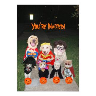 Cães & gatos engraçados o Dia das Bruxas Convite 12.7 X 17.78cm