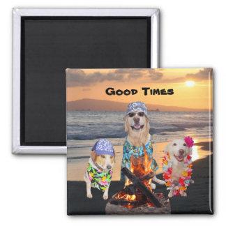 Cães na praia no por do sol imas