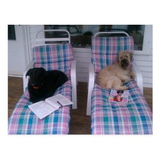 Cães que relaxam em férias cartão postal