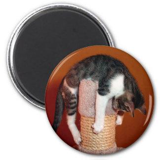Cair no ímã lá cómico do gato de gato malhado ímã redondo 5.08cm
