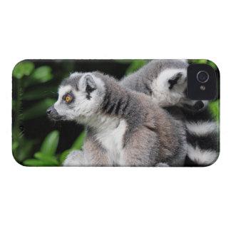 Caixa corajosa anel-atada Lemur da amora-preta Capas Para iPhone 4 Case-Mate