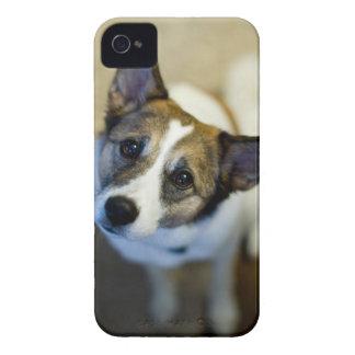 Caixa corajosa de Blackberry do cão bonito Capinha iPhone 4