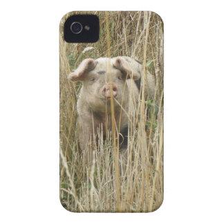 Caixa corajosa de Blackberry do porco manchado Capas Para iPhone 4 Case-Mate