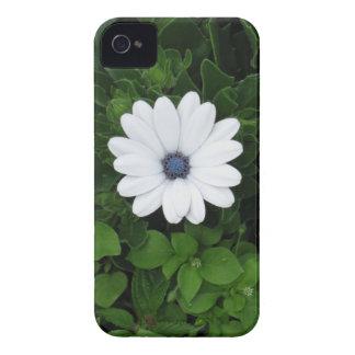 Caixa de Blackberry da flor branca Capas Para iPhone 4 Case-Mate