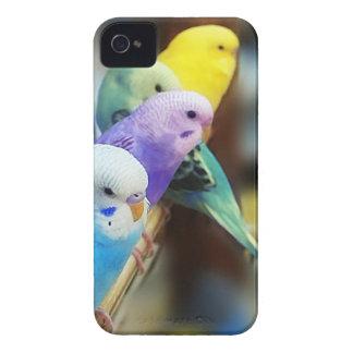 Caixa de Blackberry dos Parakeets Capinhas iPhone 4