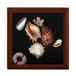 Caixa de jóia elegante do no. 15 dos Seashells Porta Jóia