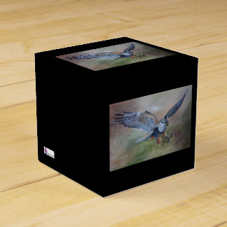 Caixa do favor do falcão