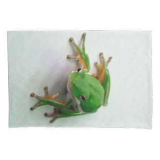 Caixa verde do travesseiro do sapo de árvore