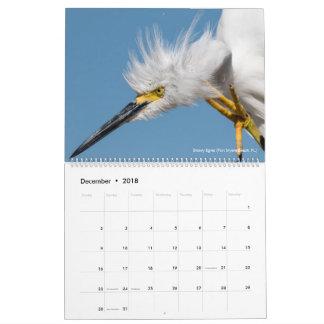 Calendário 12 pássaros para a fotografia 2018 da espinha de