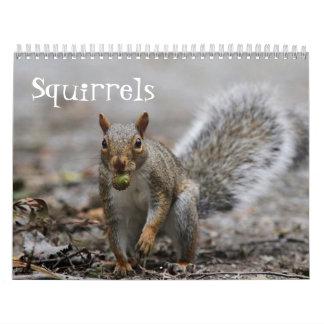 Calendário Esquilos vermelhos americanos e esquilos de cinzas