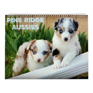 Calendário Filhotes de cachorro australianos do pastor