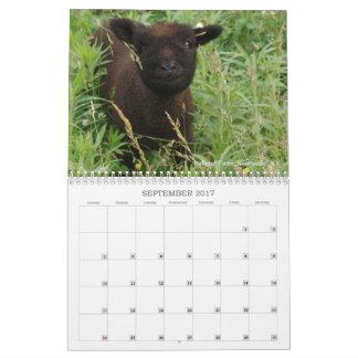 Calendário Southdown dos carneiros 2017 NABSSAR da