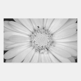 calendula-flower--black-and-white-laura-melis.jpg adesivo retangular