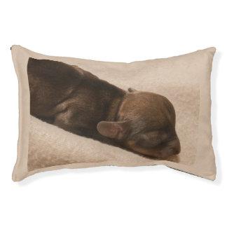 Cama Para Animais De Estimação filhote de cachorro do dachshund