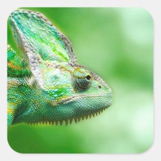 Camaleão verde maravilhoso do réptil adesivo quadrado