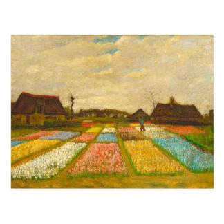 Camas de flor em Holland pelo cartão de Van Gogh