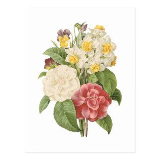 camélia narciso amor perfeito por Redouté Cartões Postais