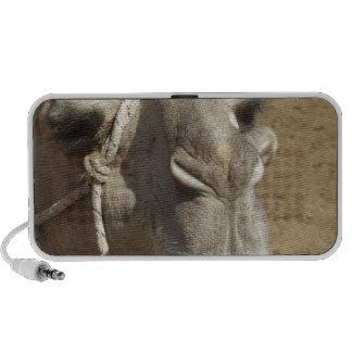Camelo Achmed Caixinhas De Som Portátil