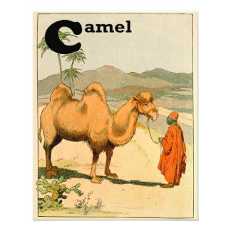 camelo bactriano da Dois-corcunda no deserto Impressão De Foto