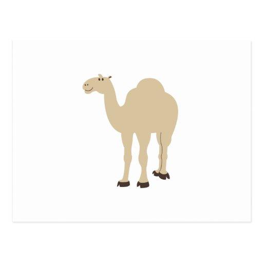 Camelo Cartao Postal
