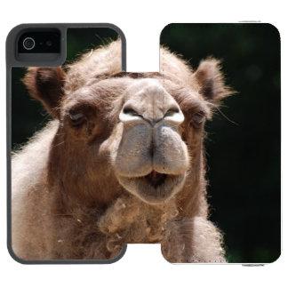Camelo corajoso