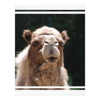 Camelo corajoso papel de carta