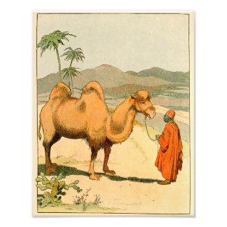 Camelo da corcunda do asiático dois impressão de foto