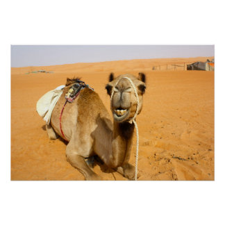 Camelo de sorriso engraçado pôster