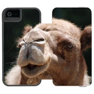 Camelo do dia de corcunda