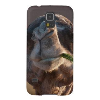 Camelo do dia de corcunda que deleita-se na grama capinha galaxy s5
