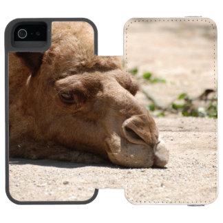 Camelo do sono