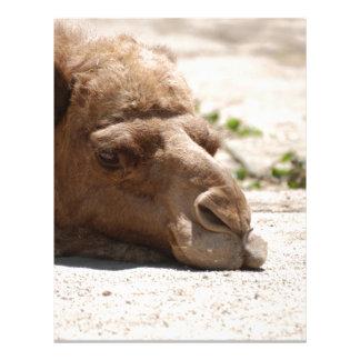 Camelo do sono papel de carta