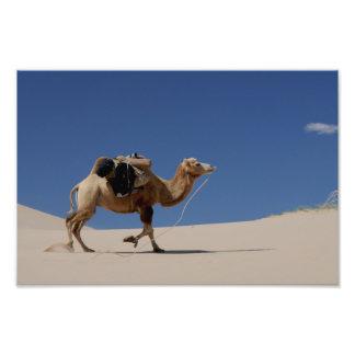 camelo impressão de foto